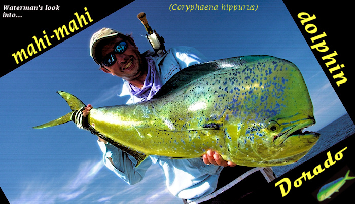 c0878ca582 Dorado (also known as Dolphin and Mahi) will forever be one of the worlds  most efficient marine species. They are found in ALL tropical and  sup-tropical ...