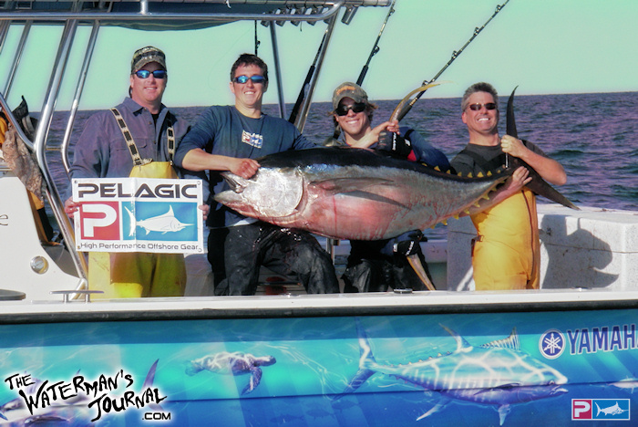 The waterman 39 s journal global sportfishing news reports for Does tuna fish have scales