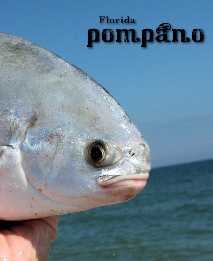 The waterman 39 s journal global sportfishing news reports for Florida pompano fish